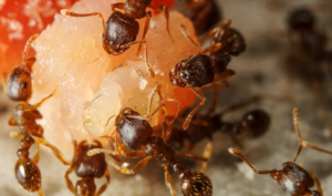 Ant Exterminator Edmonton