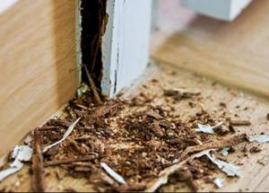Edmonton Termite Removal