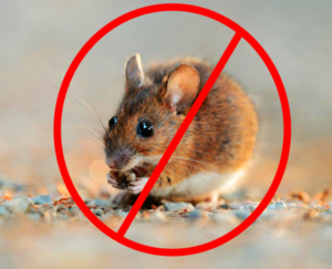 Mouse Removal Edmonton | Pestcontrolexperts.ca