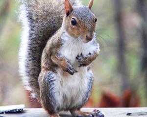 Squirrel extermination services
