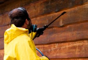 Termite Extermination Services